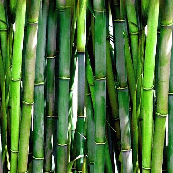 Bambus Green Pieluszki